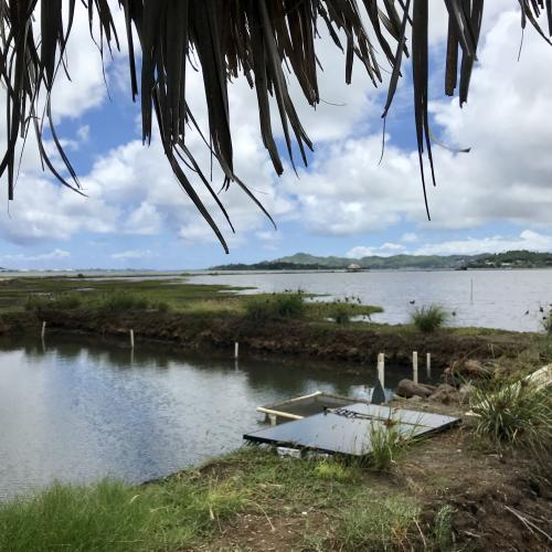Another view of the He'eia fishpond