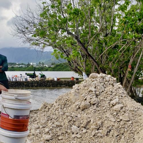 Coral to be moved across the inlet